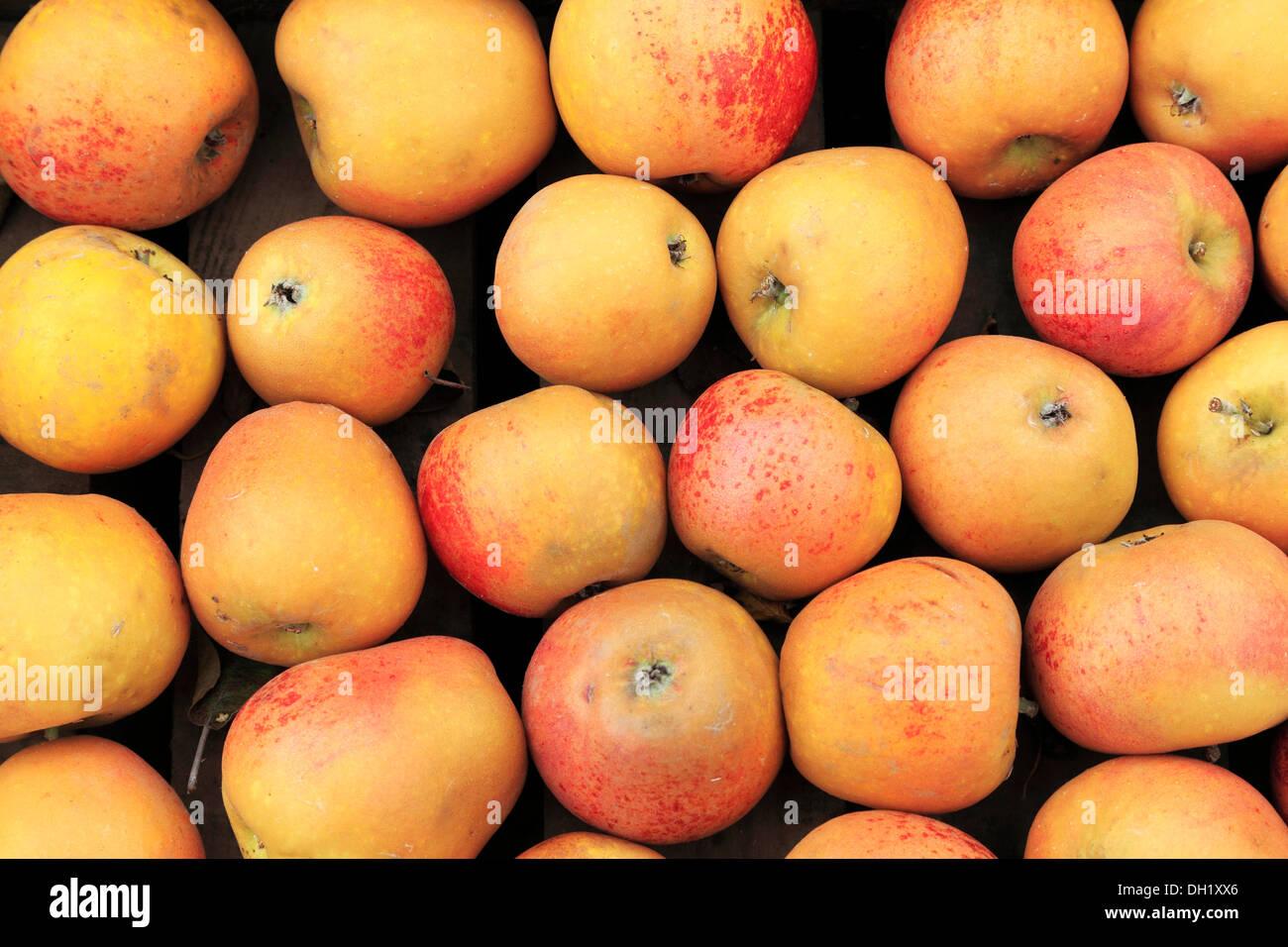 Apple 'Norfolk Royal Russet', farm shop display, apples UK - Stock Image
