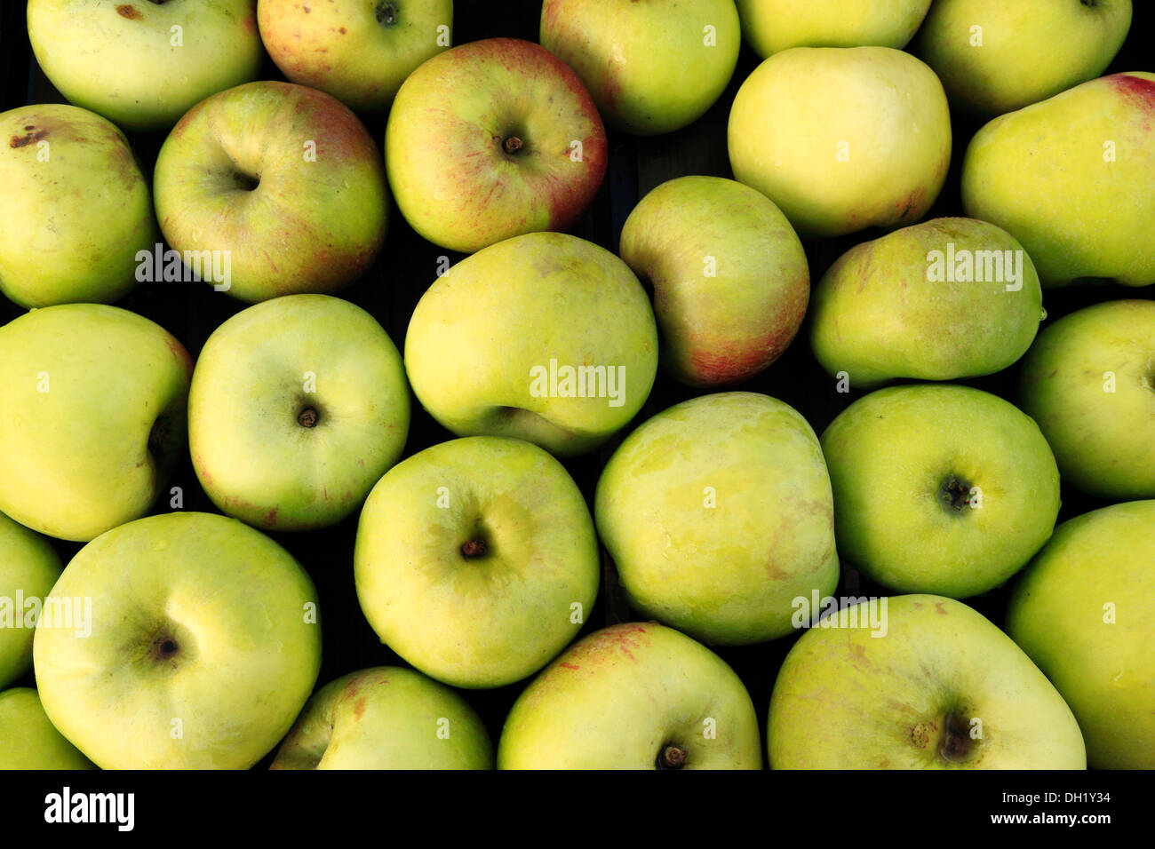 Apple 'Peasegood's Nonsuch', farm shop display, apples UK - Stock Image