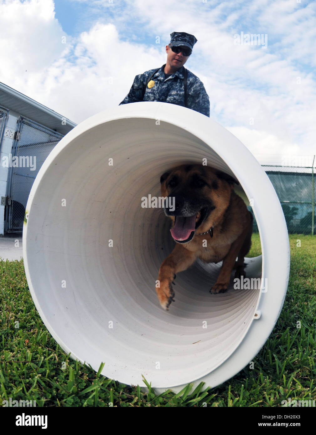 Master-at-Arms 2nd Class Justin Sosa, from Los Angeles, directs Military Working Dog Hopski through an obedience Stock Photo