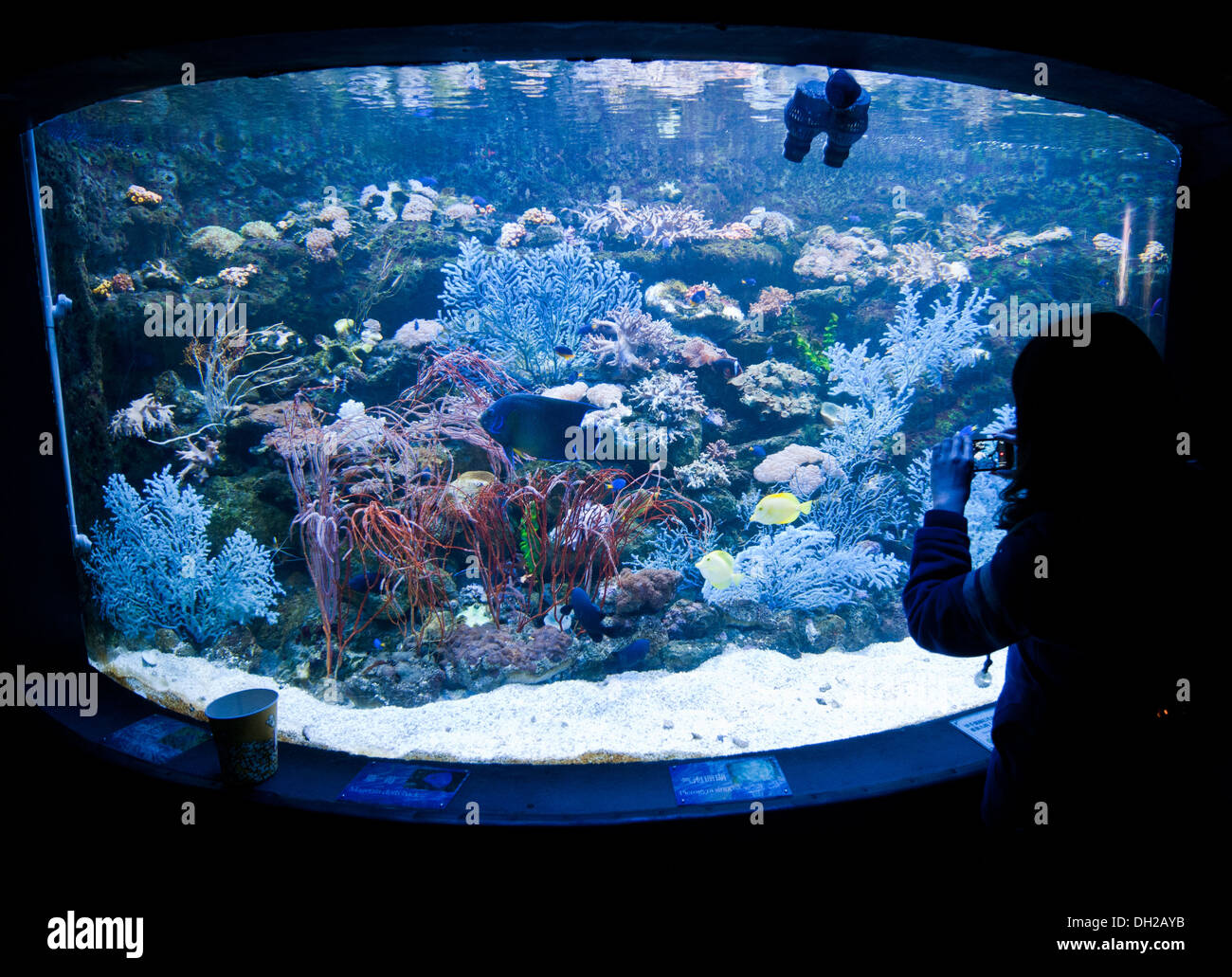 Large Fish Tank In Beijing Gongti Richina Underwater World Also Called Blue Zoo China