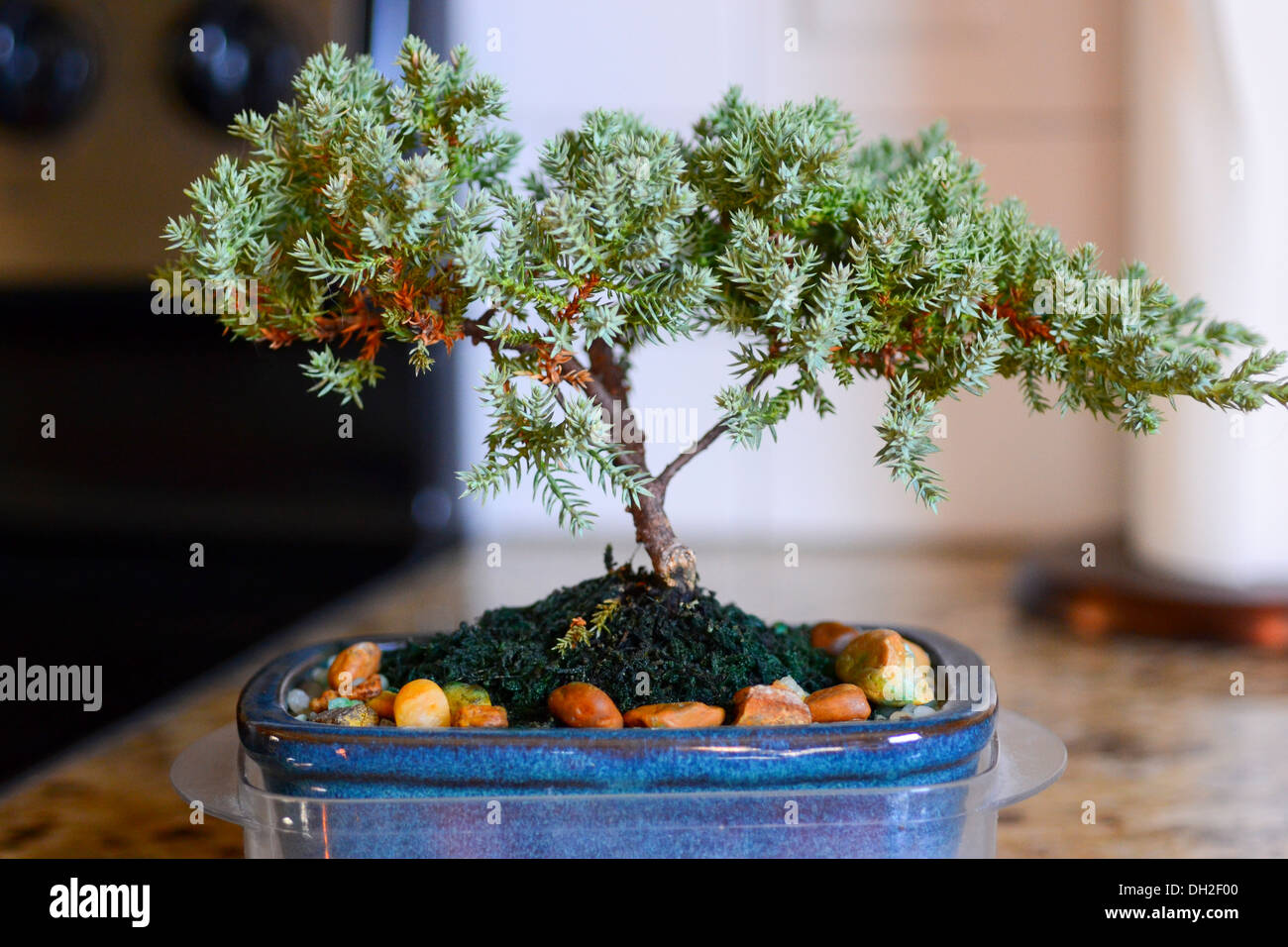 Karate Kid Tree High Resolution Stock Photography And Images Alamy