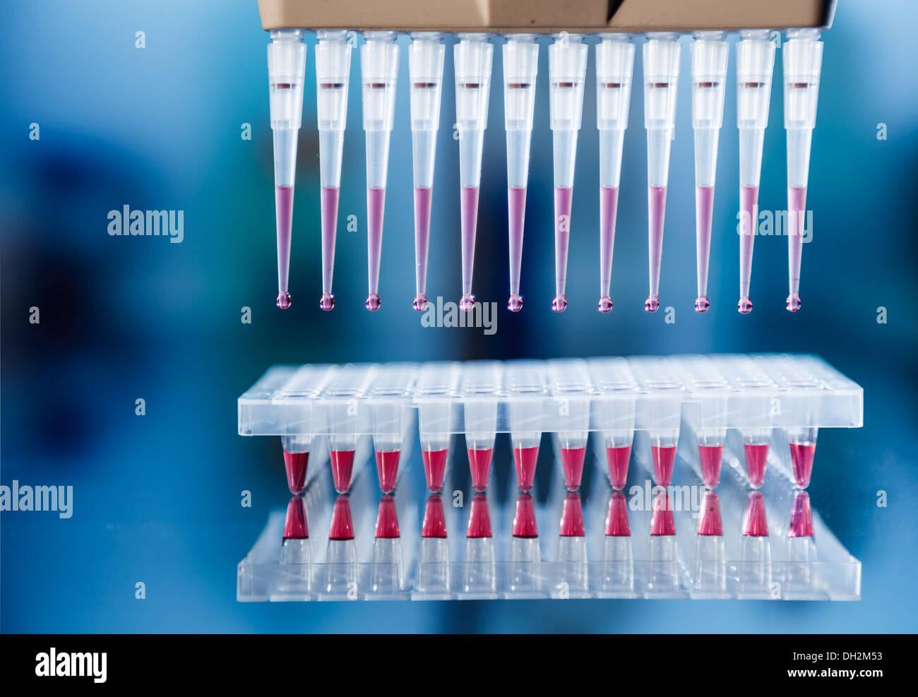 Paternity test method of genetic analysis - Stock Image