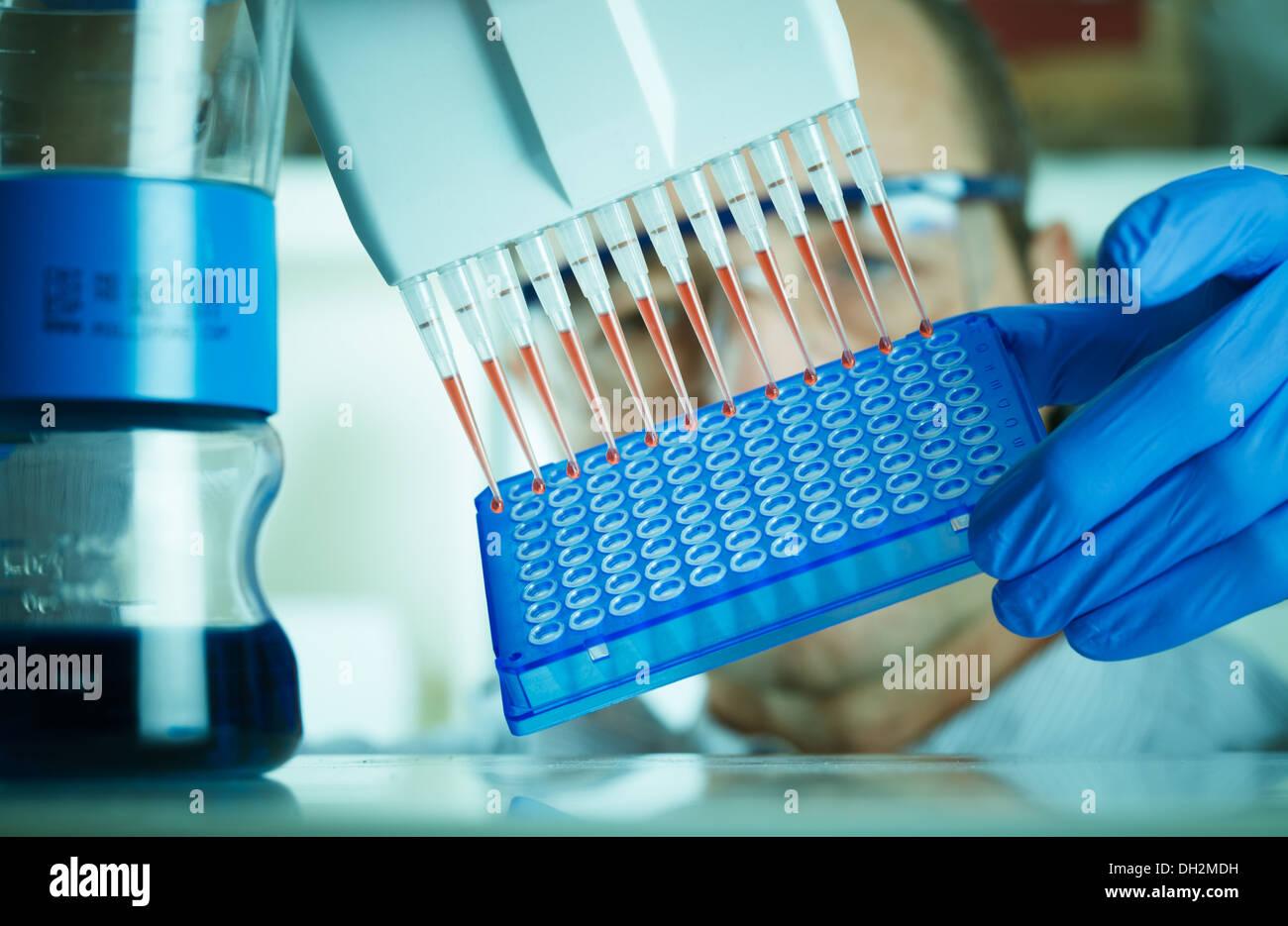 genetics researcher makes genetic analysis - Stock Image