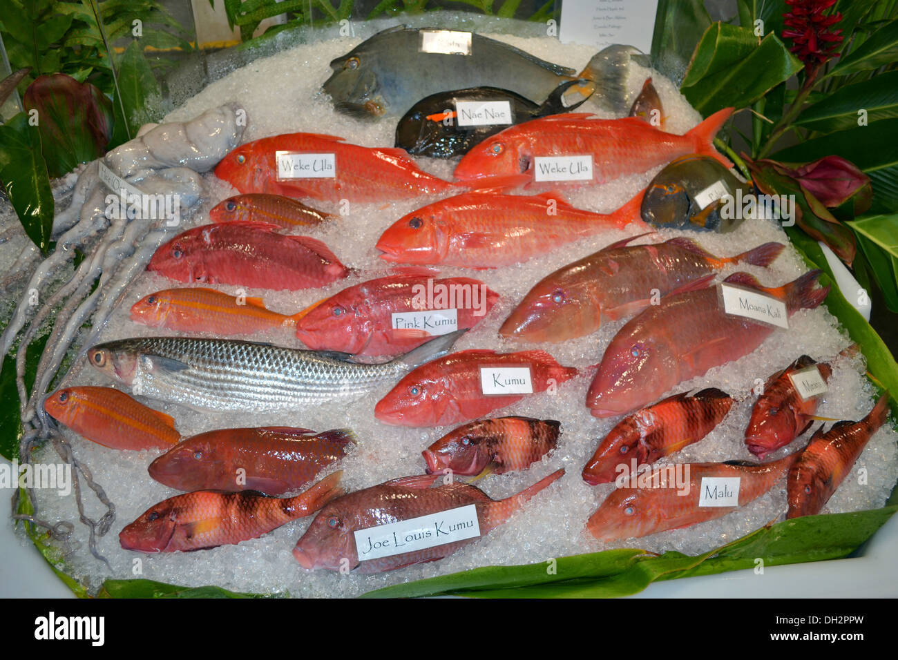 Fishes For Sale Stock Photos & Fishes For Sale Stock Images - Alamy