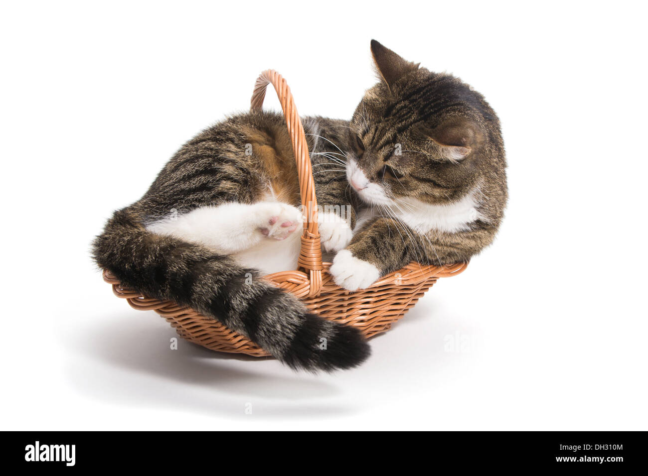 Cat grew up and he needed a big house (basket) - Stock Image