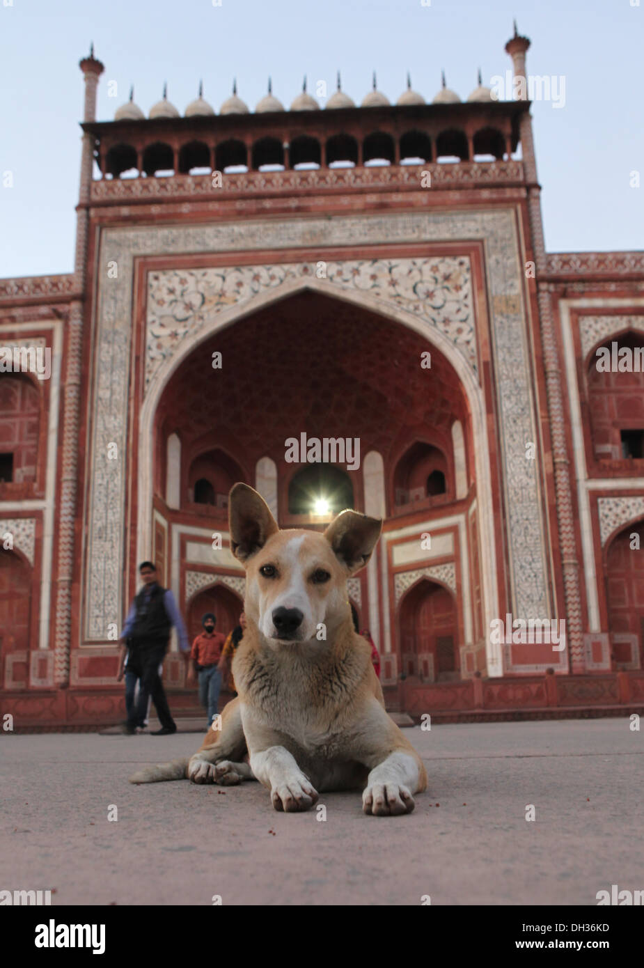 Dog in front of the entrance to the Taj Mahal, Agra, Uttar Pradesh, India, Asia - Stock Image