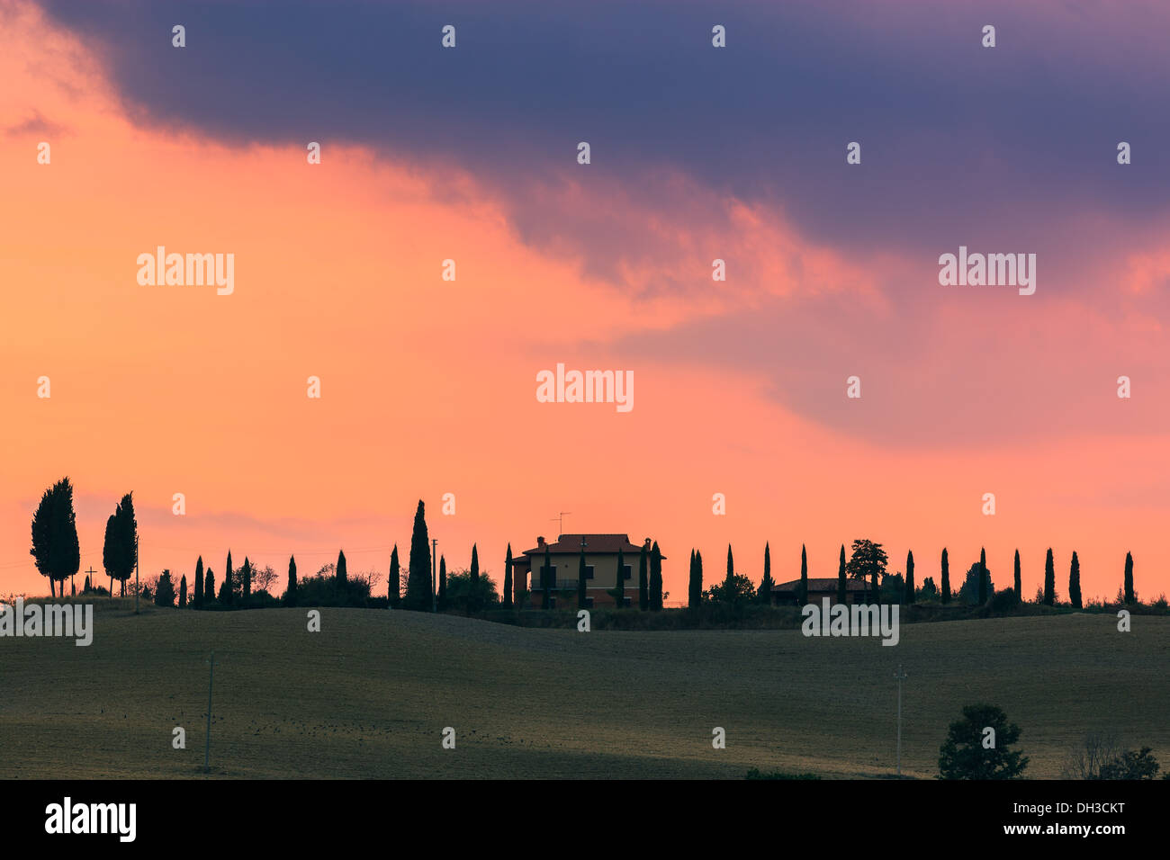 House with the famous Cypress trees in the heart of the Tuscany, near Pienza, Italy - Stock Image