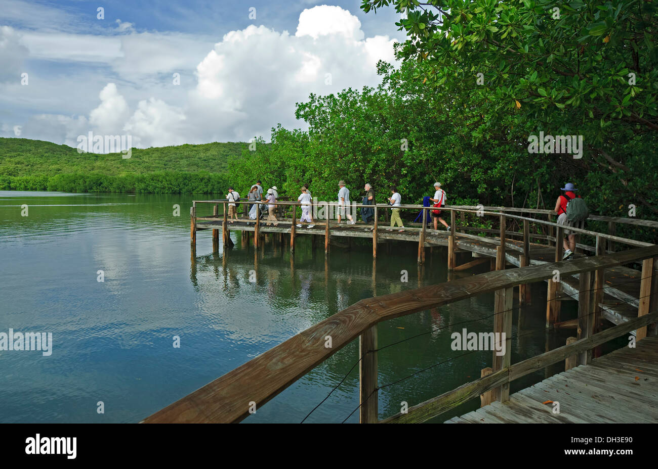 Puerto Rico Mangrove Tour