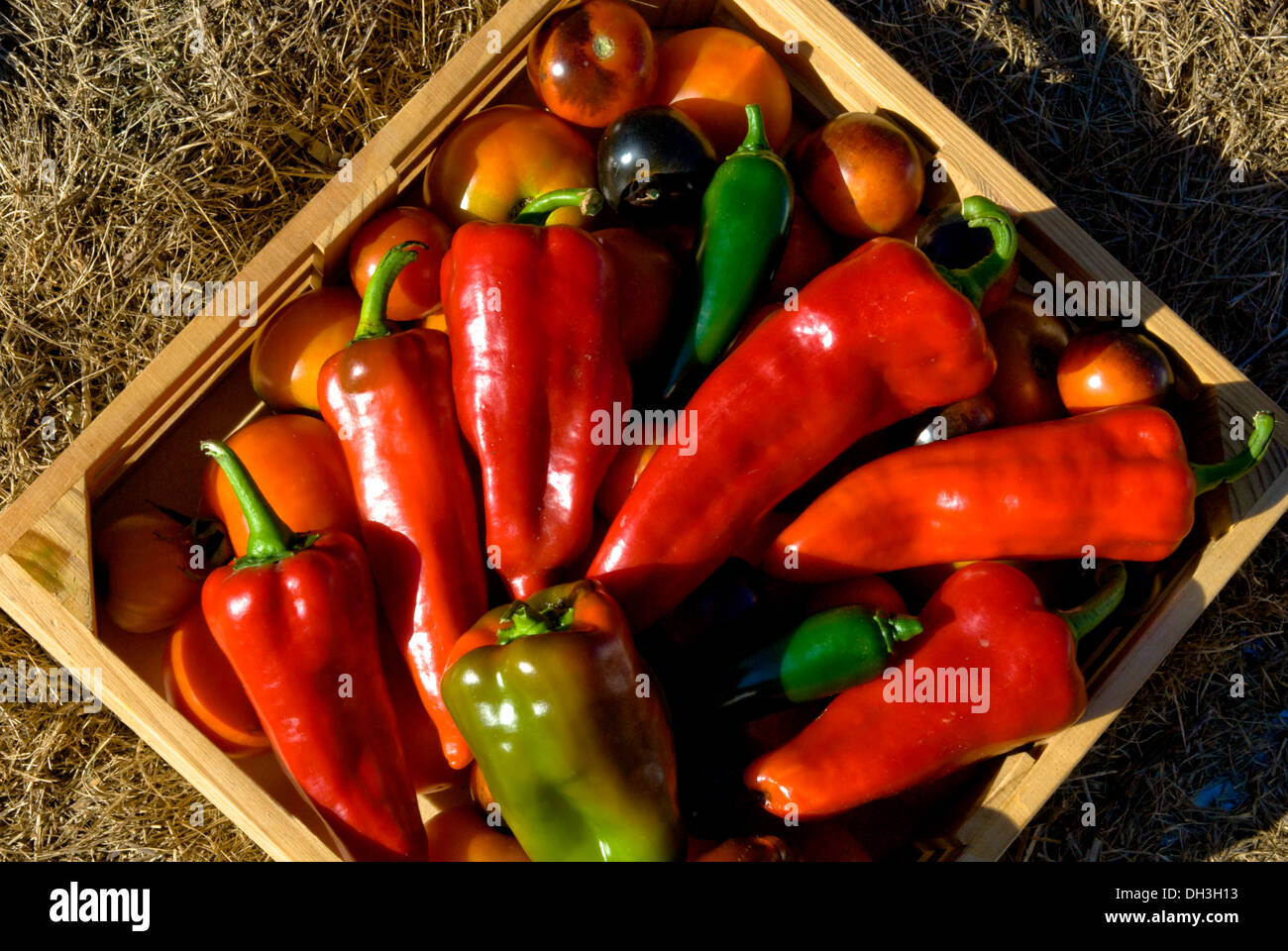 Box of organic tomatoes, sweet and hot peppers purchased from an