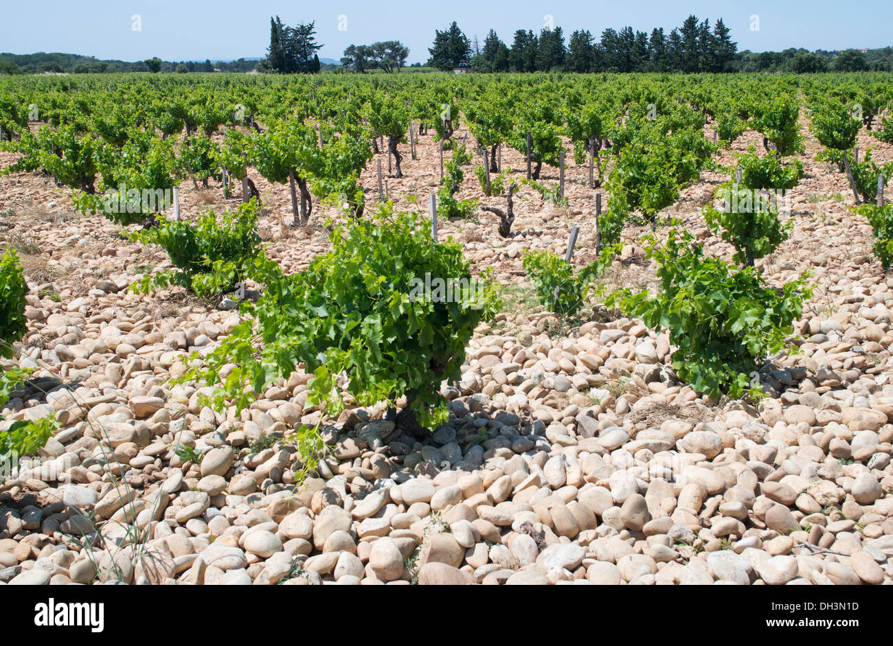 Stones or galets placed on the soil in a  Châteauneuf-du-Pape vineyard, France, Europe - Stock Image