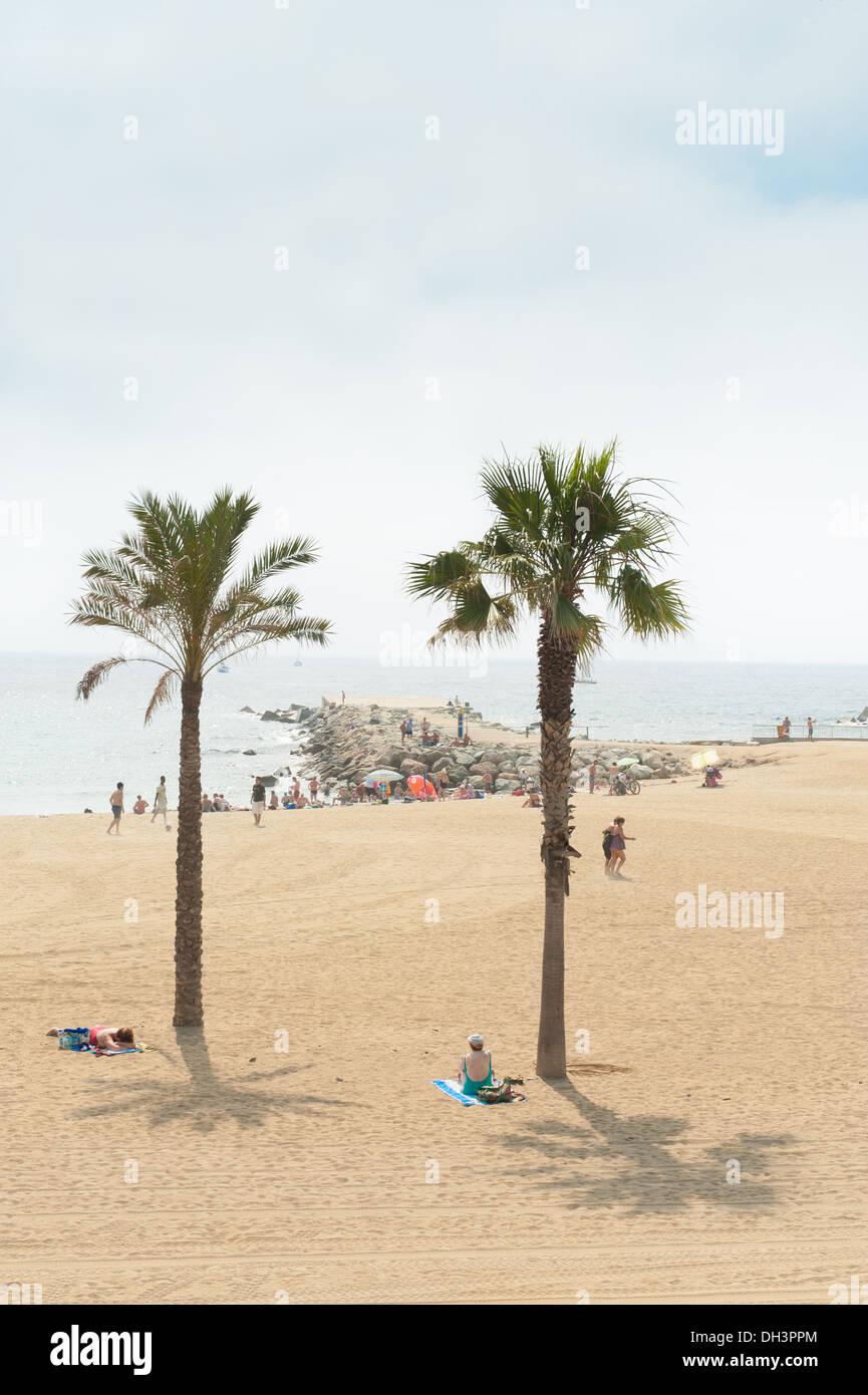 Sunbathers on Barcelona's city beach under palm trees in Summer, Barcelona, Catalonia, Spain - Stock Image