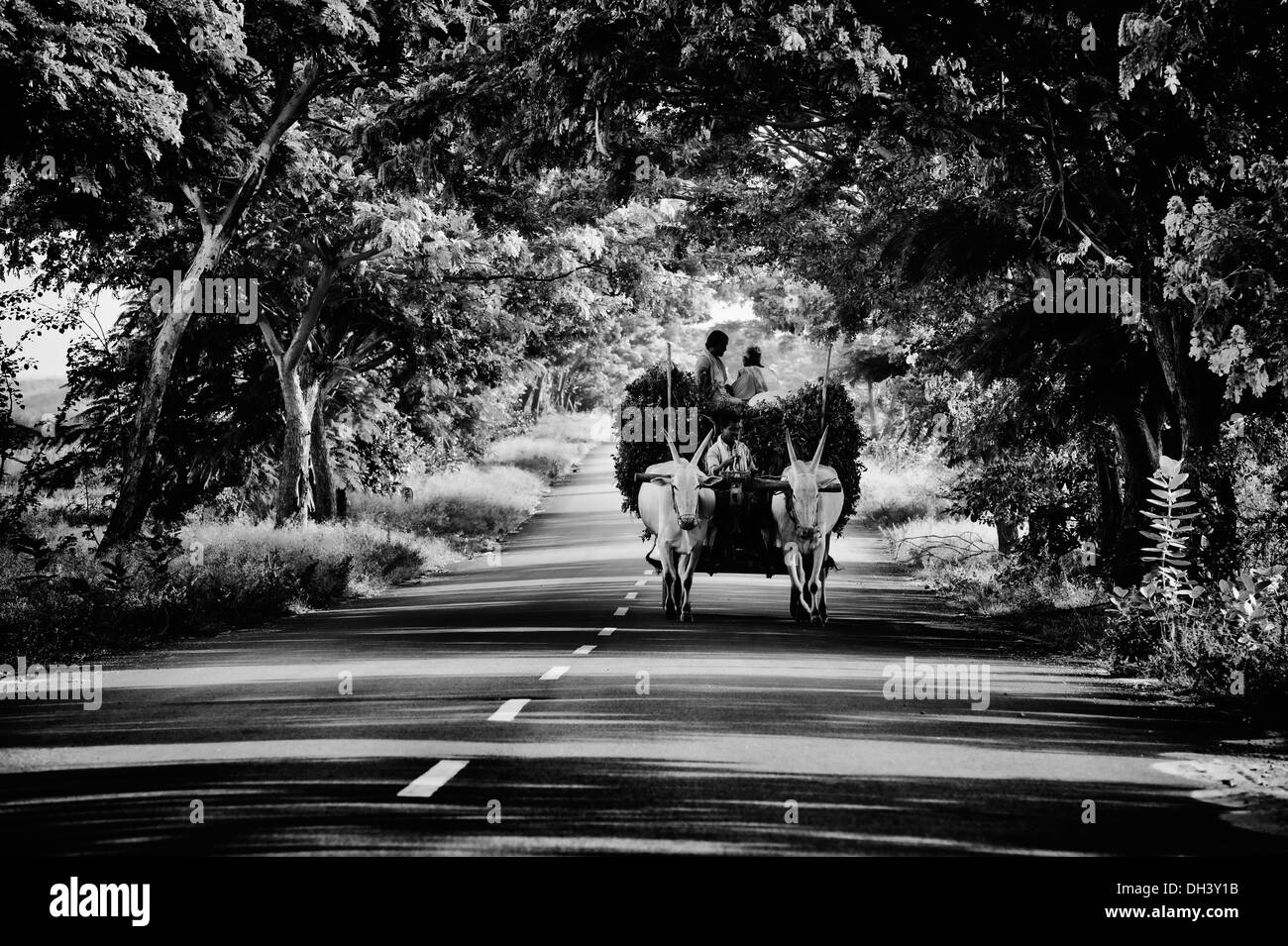 Indian farm workers with harvested peanut plants on a a bullock cart in the rural indian countryside. Andhra Pradesh, India. Black and White. - Stock Image