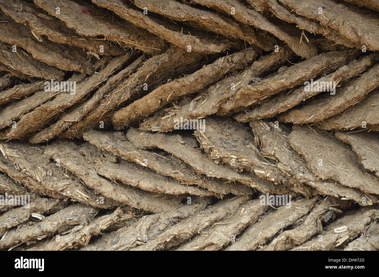 Gobar Cow dung cakes stacked in four rows Jodhpur Rajasthan India Asia - Stock Image