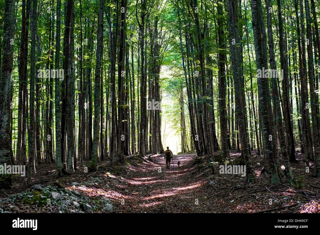 Footpath in a forest in Slovenia Stock Photo