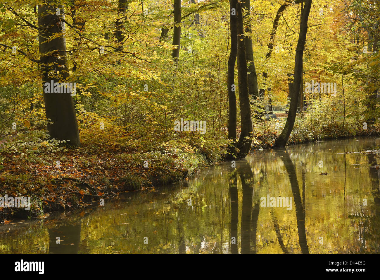 Colorful Autumn Foliage with Water Reflections - Stock Image