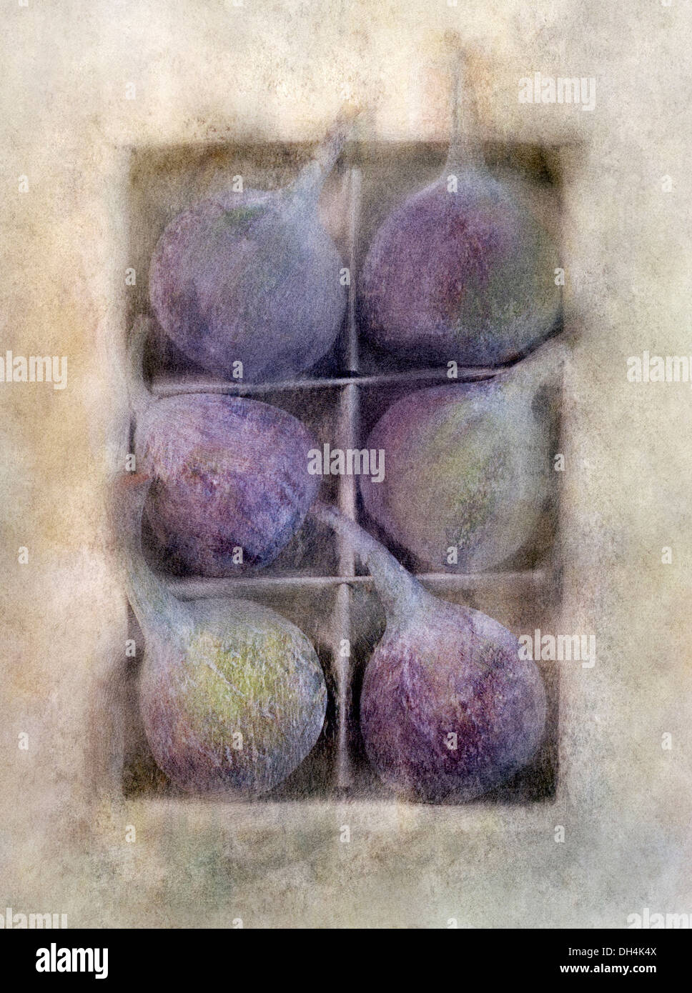 Fig Ficus carica. Digitally manipulated image of box of six figs against softened muted background creating illustration effect. - Stock Image