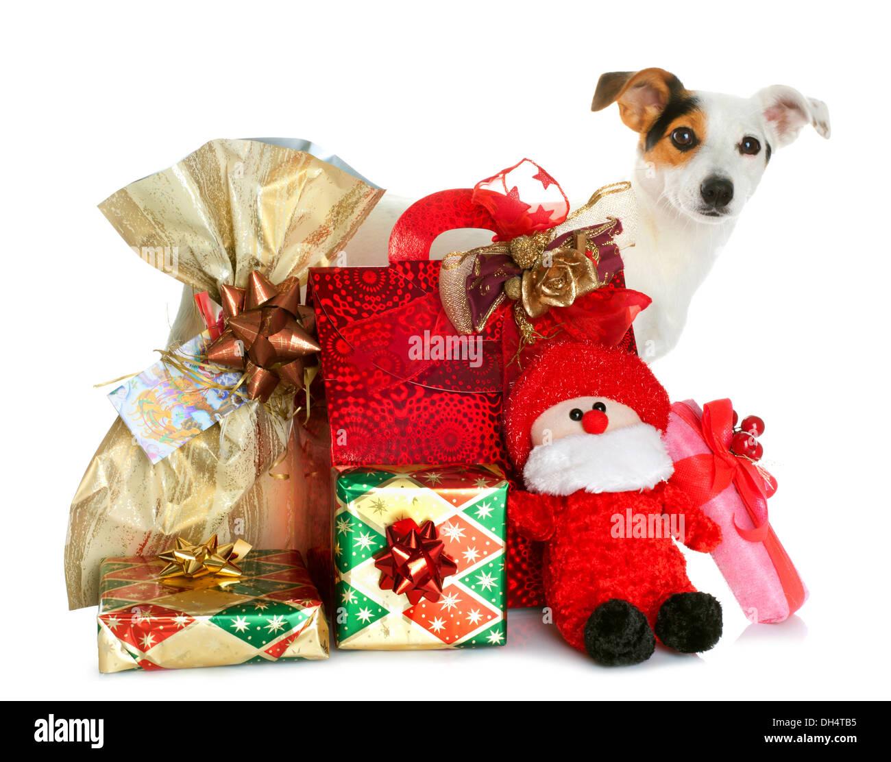 dog xmas gift boxes