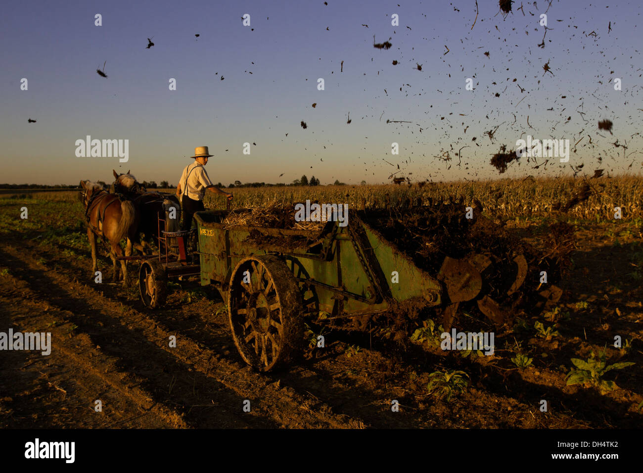Amish farmers spreading manure from his cows on a corn field that was recently harvested on his farm in Oxford, Stock Photo