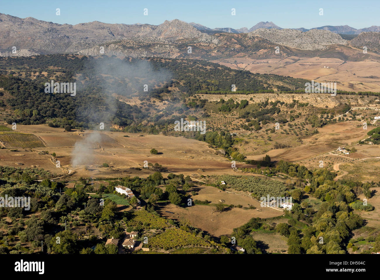 AGRICULTURE IN SPAIN NEAR RONDA ANDALUCIA WITH THE SERRANIA DE RONDA MOUNTAINS IN THE BACKGROUND - Stock Image