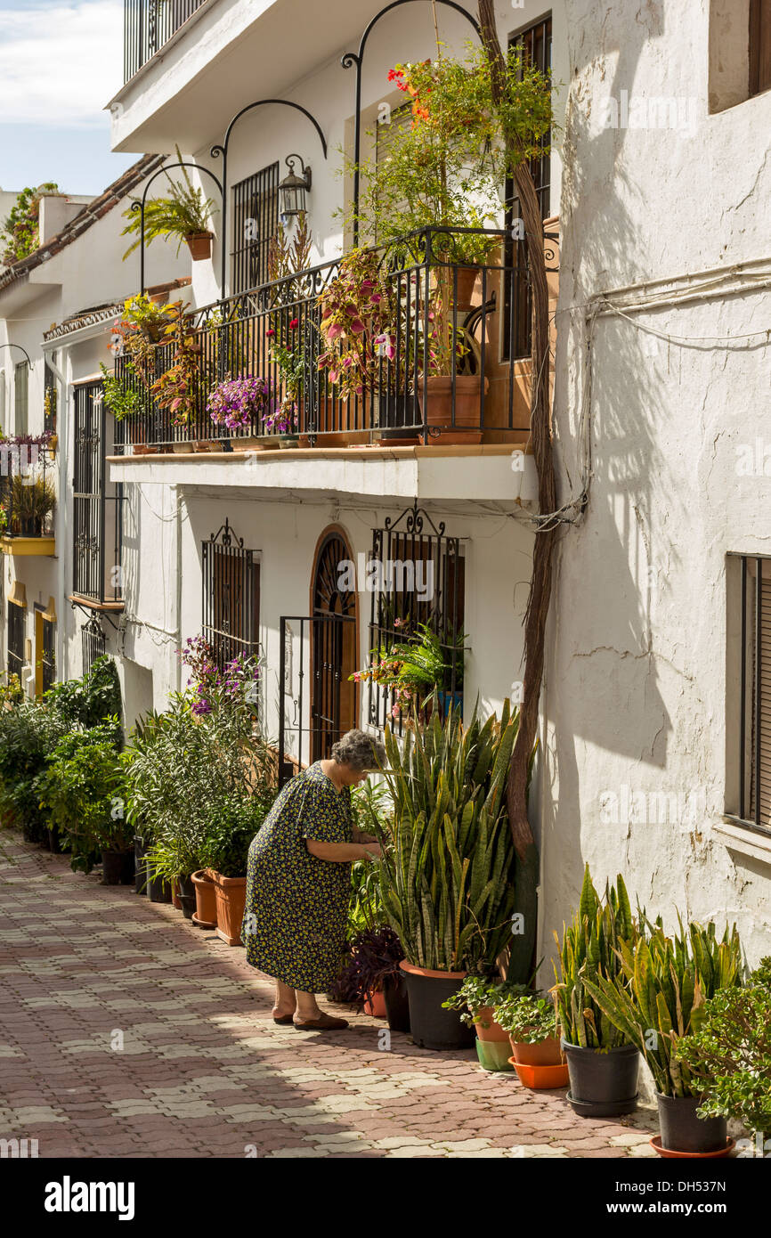 GARDENING AND TENDING THE FLOWERS AND PLANTS  IN MARBELLA OLD TOWN ANDALUCIA SPAIN - Stock Image