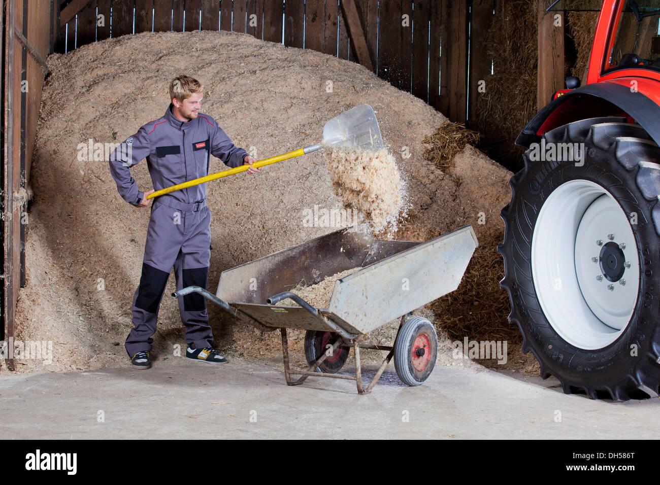 Young man shovelling sawdust into a wheelbarrow, Reith im Alpbachtal, Kufstein District, North Tirol, Tirol, Austria - Stock Image