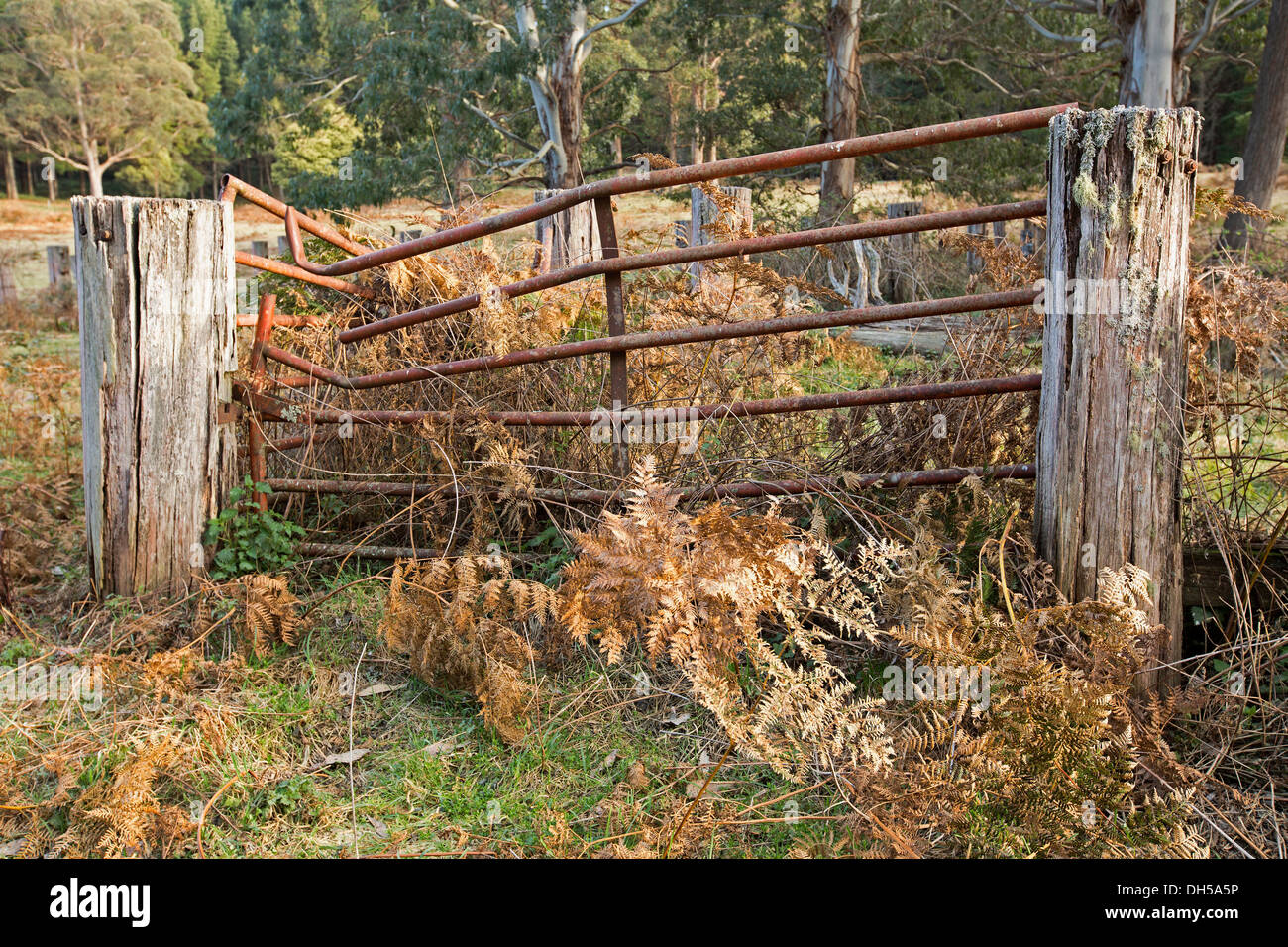 Farm Gate Australia Stock Photos Amp Farm Gate Australia