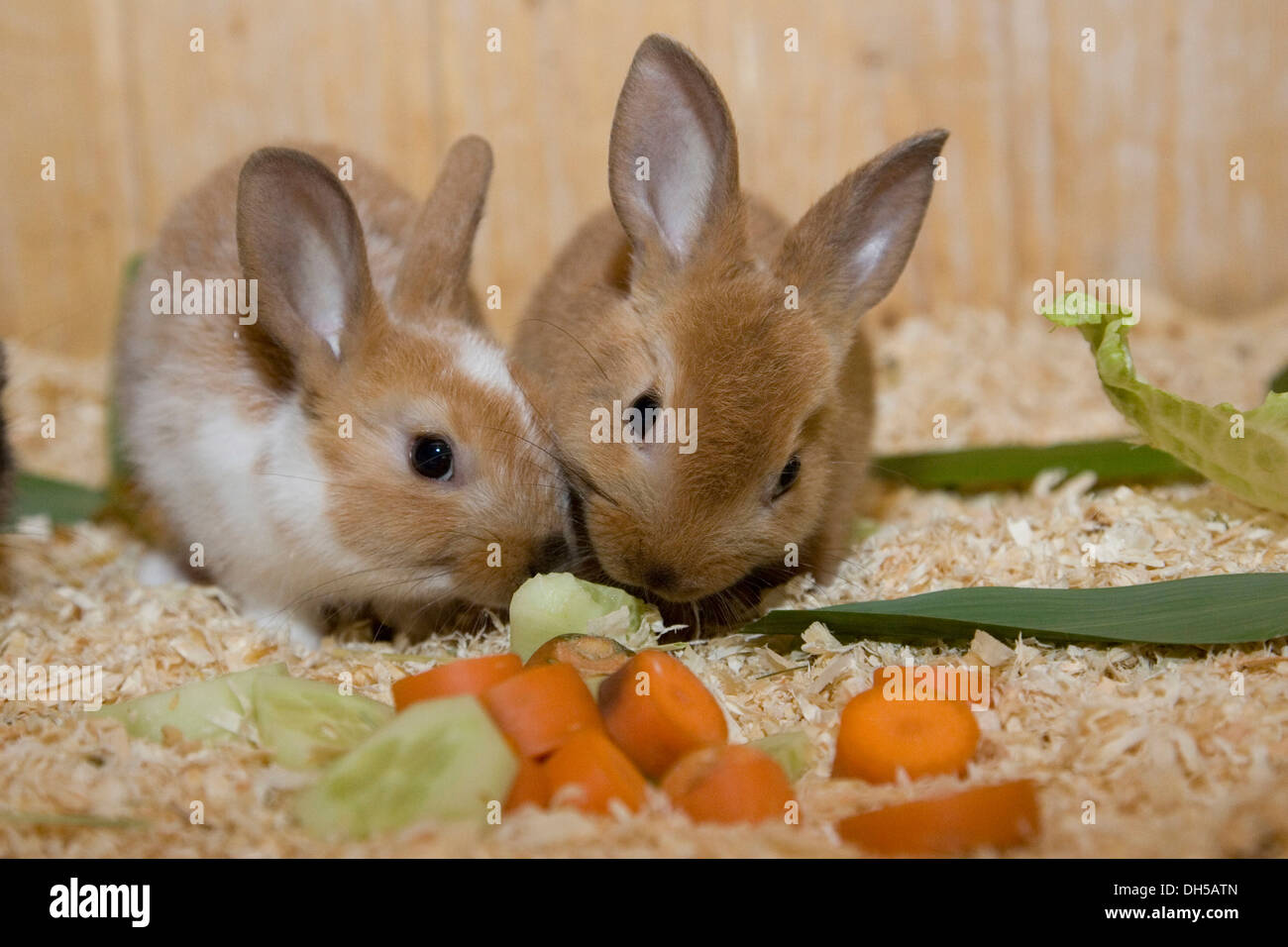 What Do Rabbits Eat And Drink | Complete Diet Guide For Rabbits ...