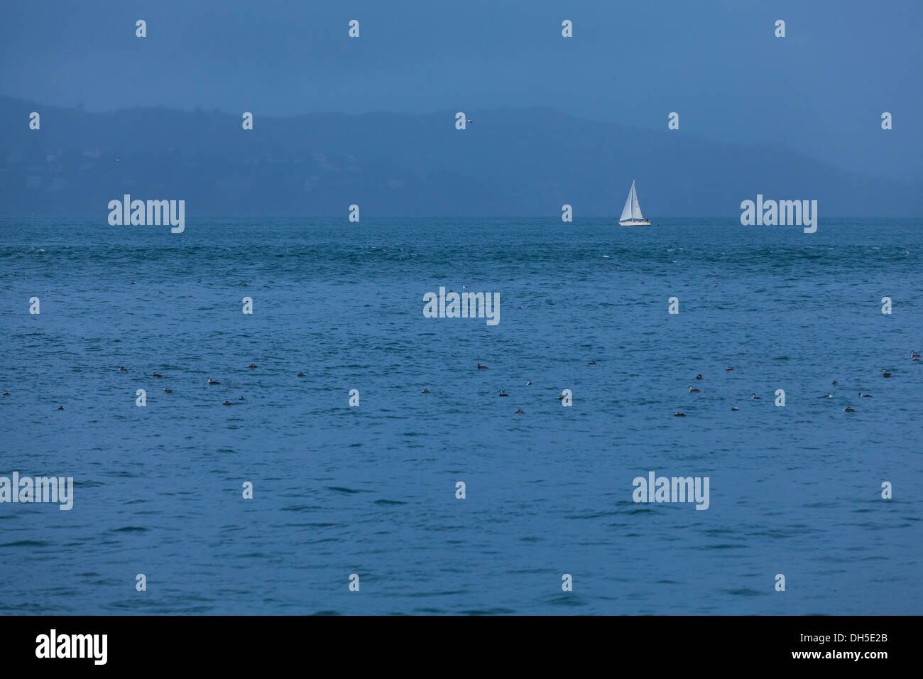 Single sail boat on open water - Stock Image