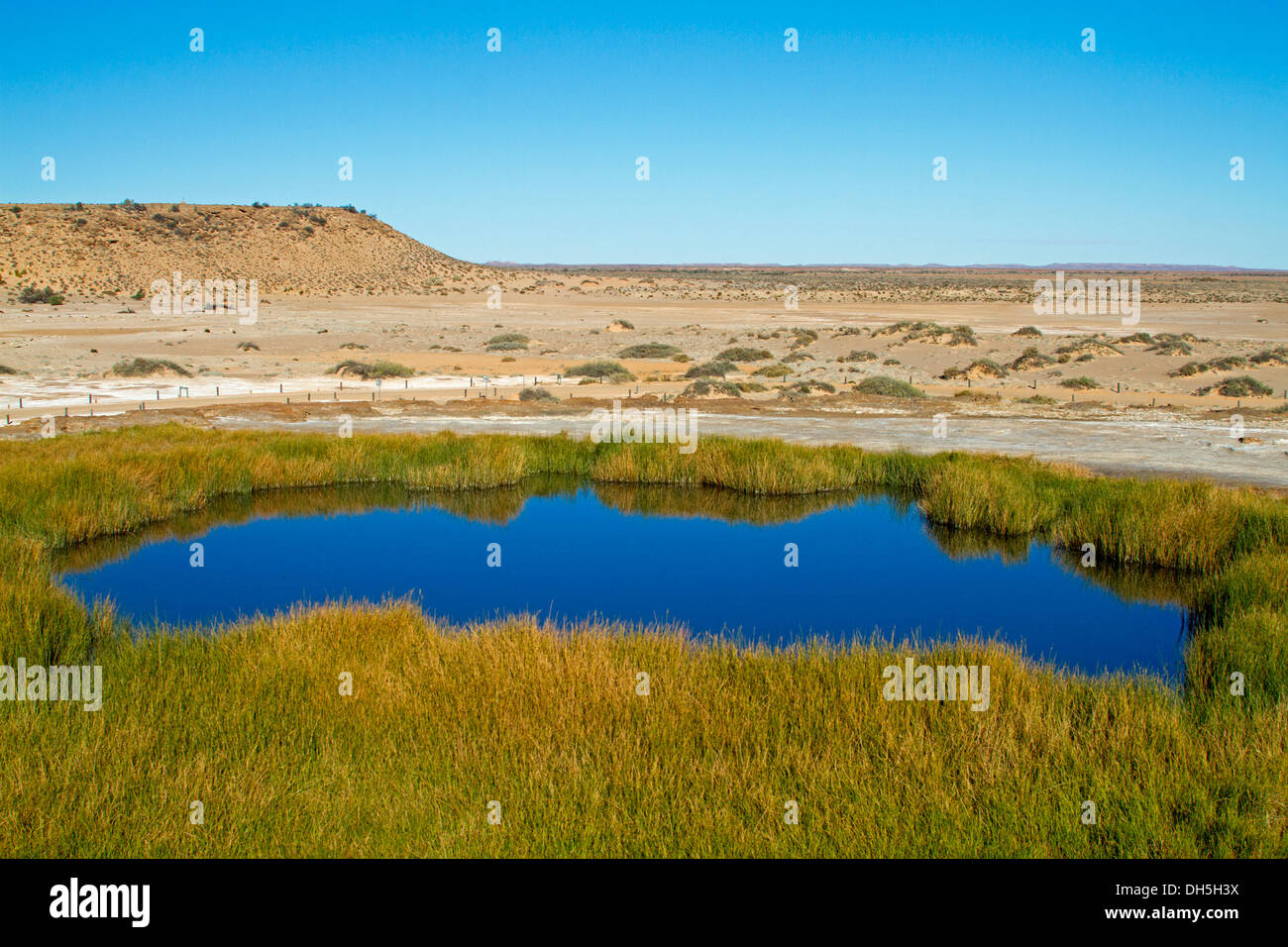 Landscape with blue waters and reeds of Blanche Cup mound spring, oasis in outback plains near Oodnadatta track South Australia - Stock Image