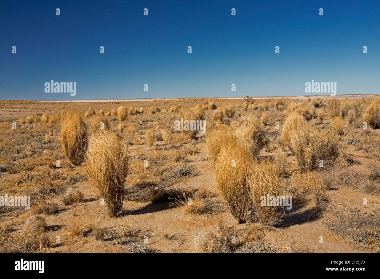 Australian outback landscape - plains with stark brown vegetation and cloudless blue sky near Lake Eyre northern South Australia - Stock Image