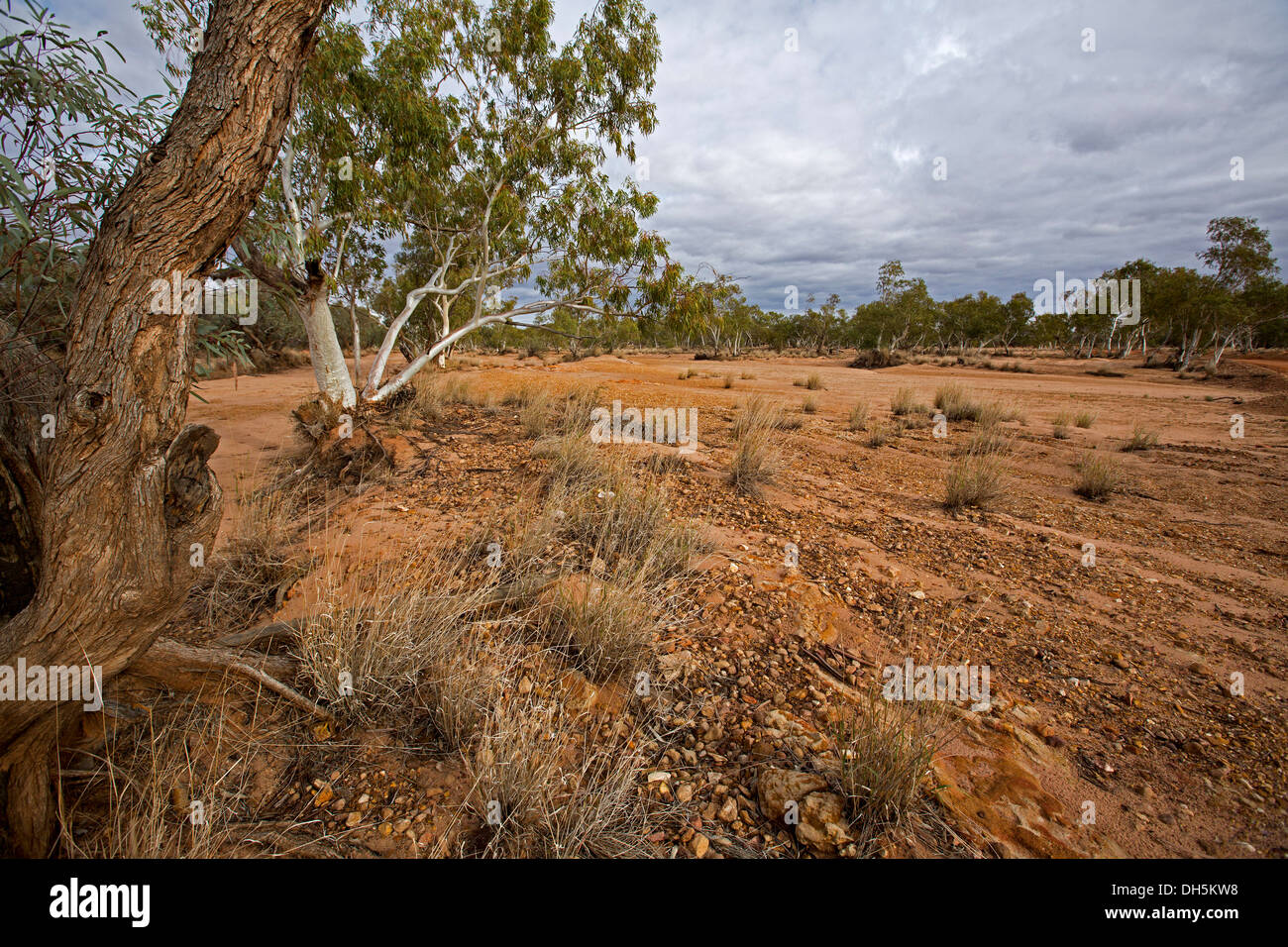 Desolate landscape in outback Australia, wide dry and stony riverbed surrounded by gum trees in Northern Territory Australia - Stock Image