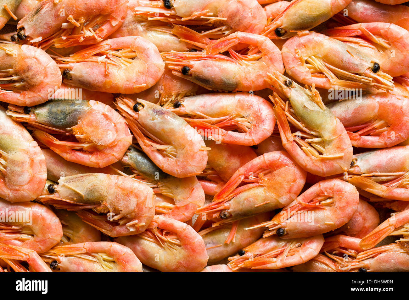 top view of the shrimps - Stock Image