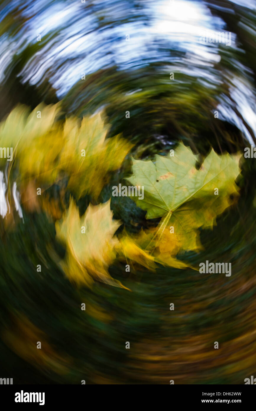 Quirky autumn image: Windy day - swirling leaves - Stock Image