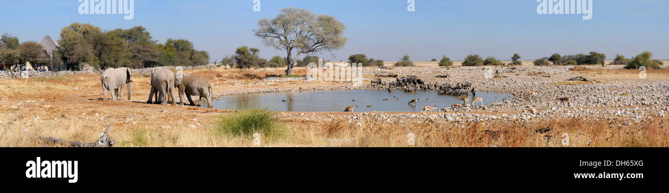 Panorama from four photos of Okaukeujo waterhole, Etosha National Park, Namibia - Stock Image