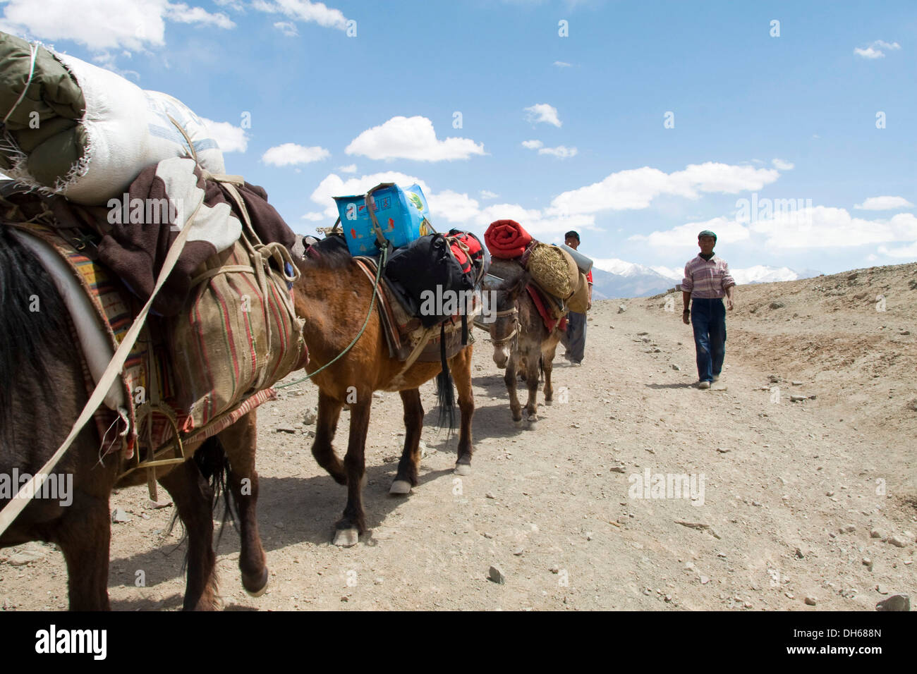 Two Tibetan guides and and their ponies trekking through the Himalayan region near Leh, from Spituk to Stok where they cross a - Stock Image