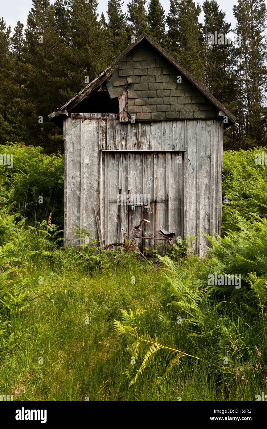 An abandoned rusting bicycle in green undergrowth leaning against a wooden shed - Stock Image