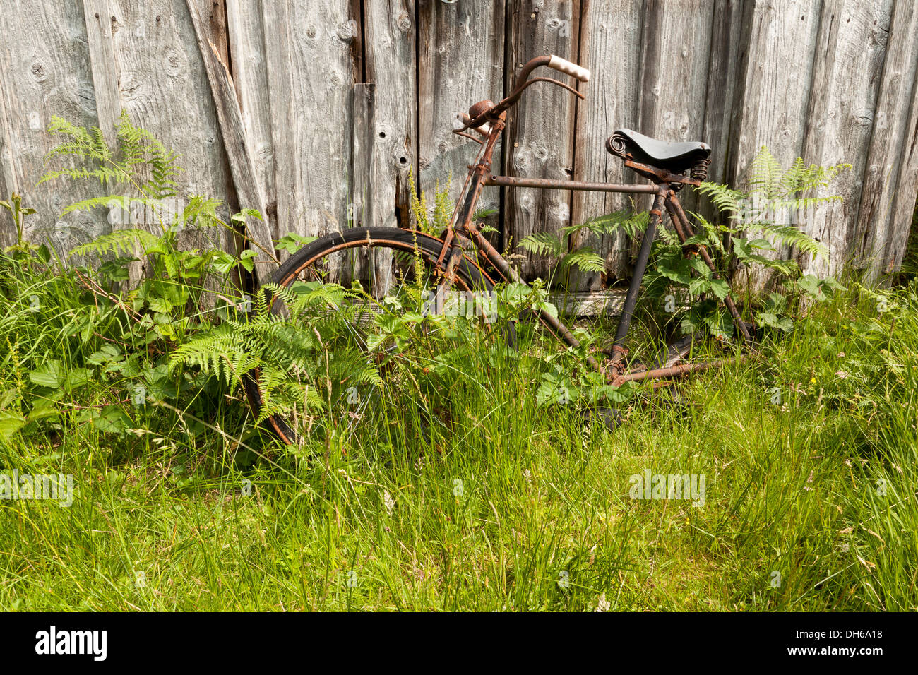 An abandoned rusting bicycle in green undergrowth leaning against a wooden shed Stock Photo