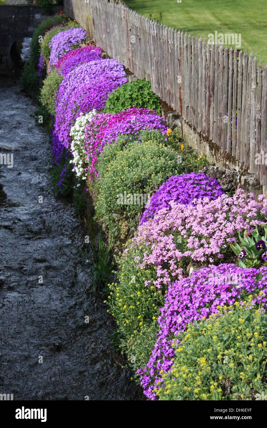 Purple flowering plants against fence Stock Photo