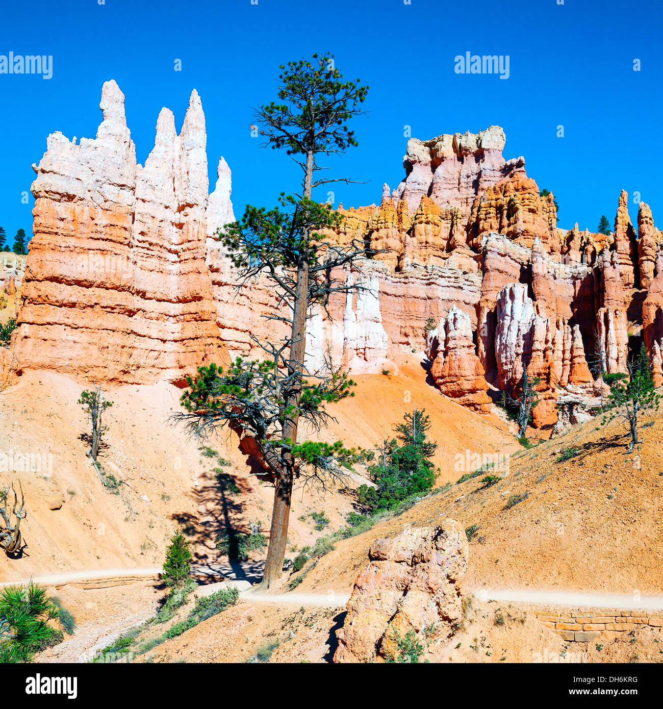 spectacular Hoodoo rock spires of Bryce Canyon, Utah, USA - Stock Image
