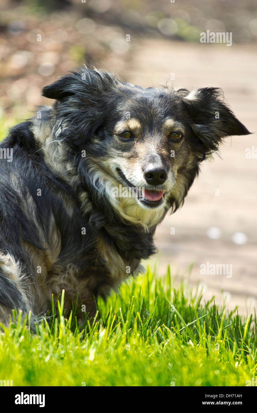 mixed breed dog in a park with green grass and bushes Stock Photo
