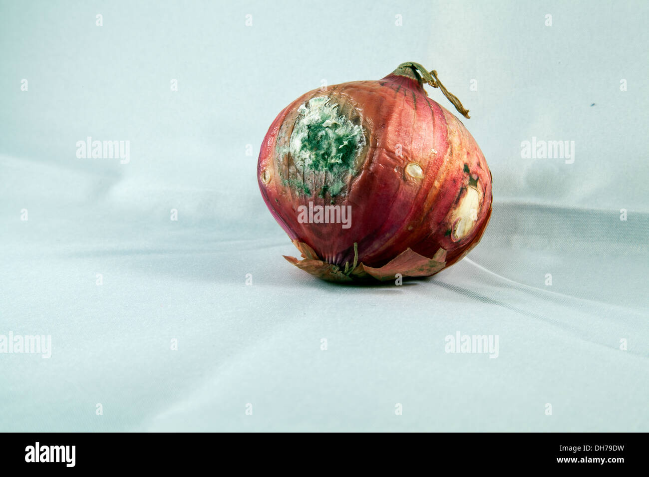 Mouldy Onion - Stock Image