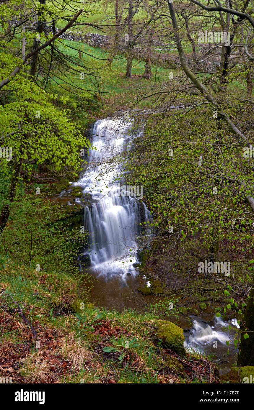 Scalebar Force Waterfall near Malham in the Yorkshire Dales National Park, UK - Stock Image