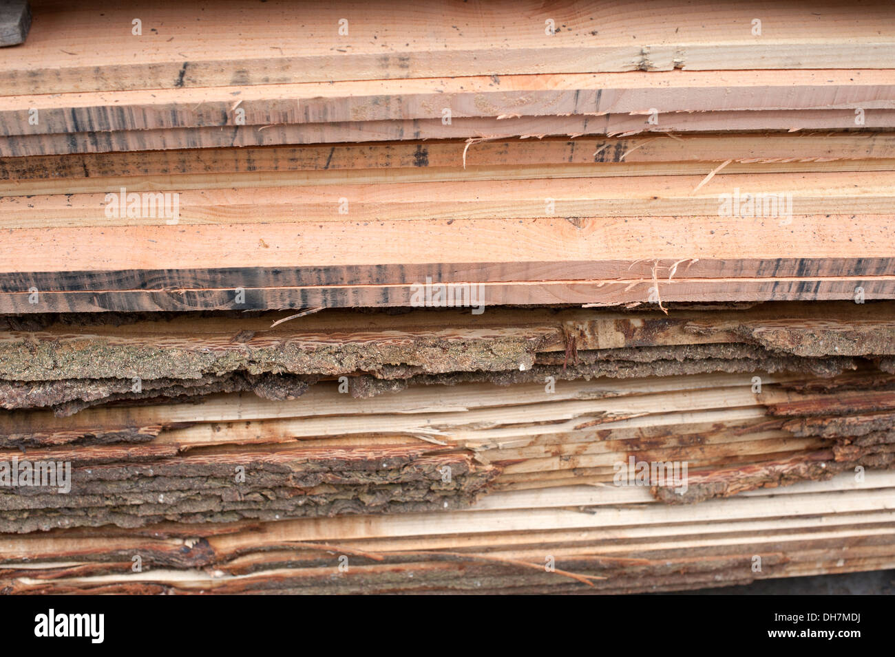 New Planks of wood cut from tree trunk Fresh rough - Stock Image
