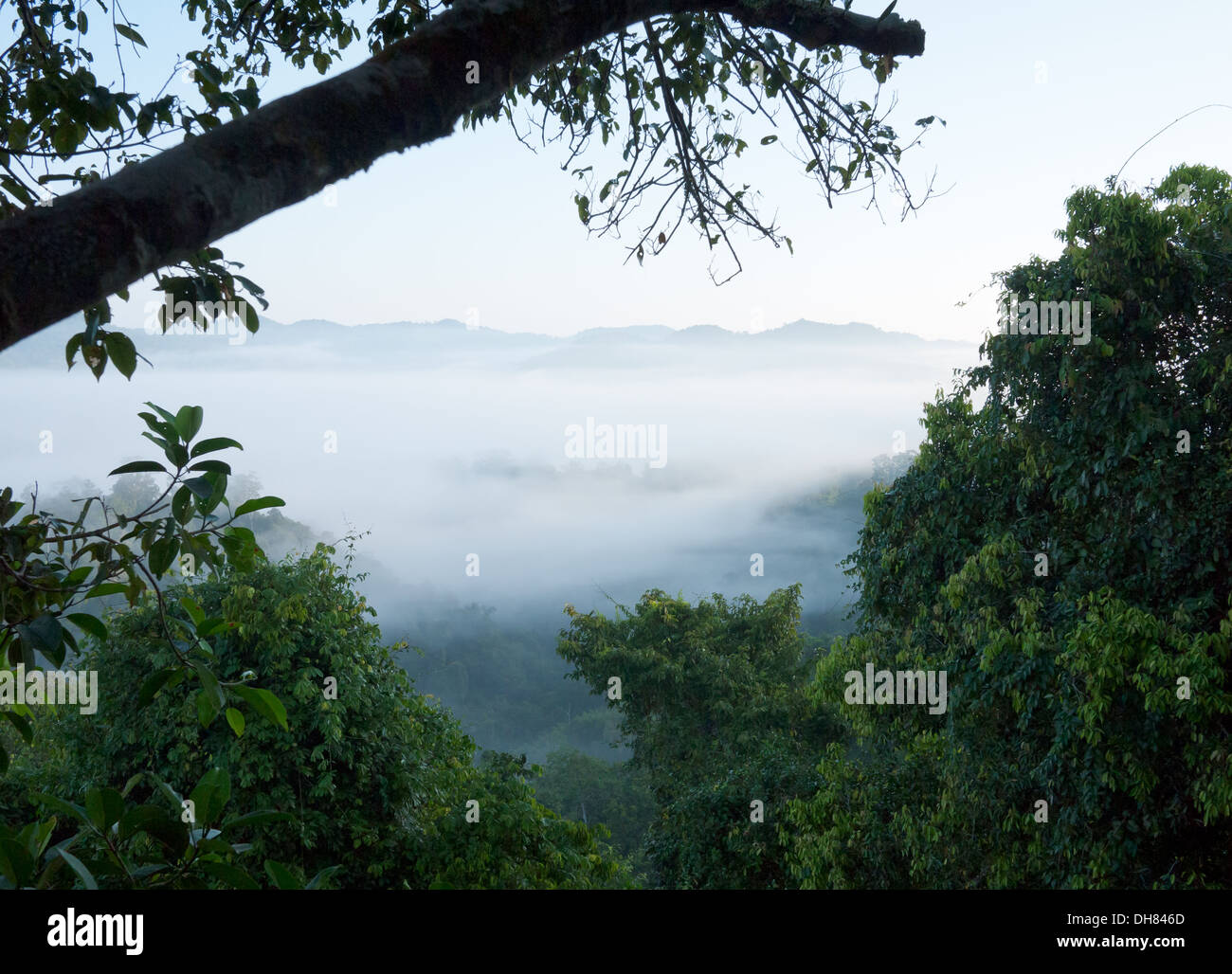 A view of the misty rainforest as seen from a treehouse at The Gibbon Experience in Bokeo Nature Reserve, near Huay Xai, Laos. - Stock Image