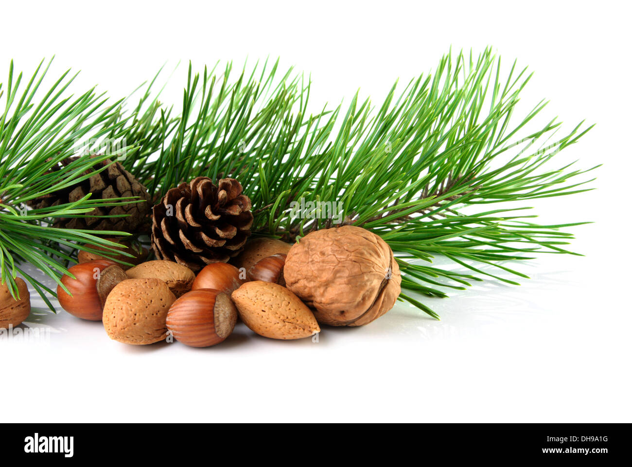 Christmas decoration with mixed nuts, pine twig and pine cones on a white background - Stock Image