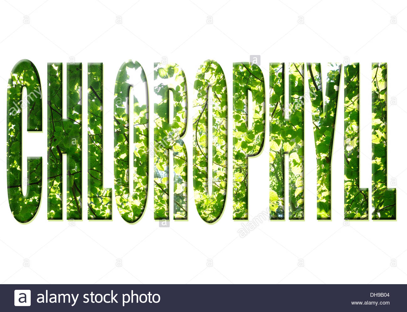 Digital composition Tree word - Chlorophyll. - Stock Image