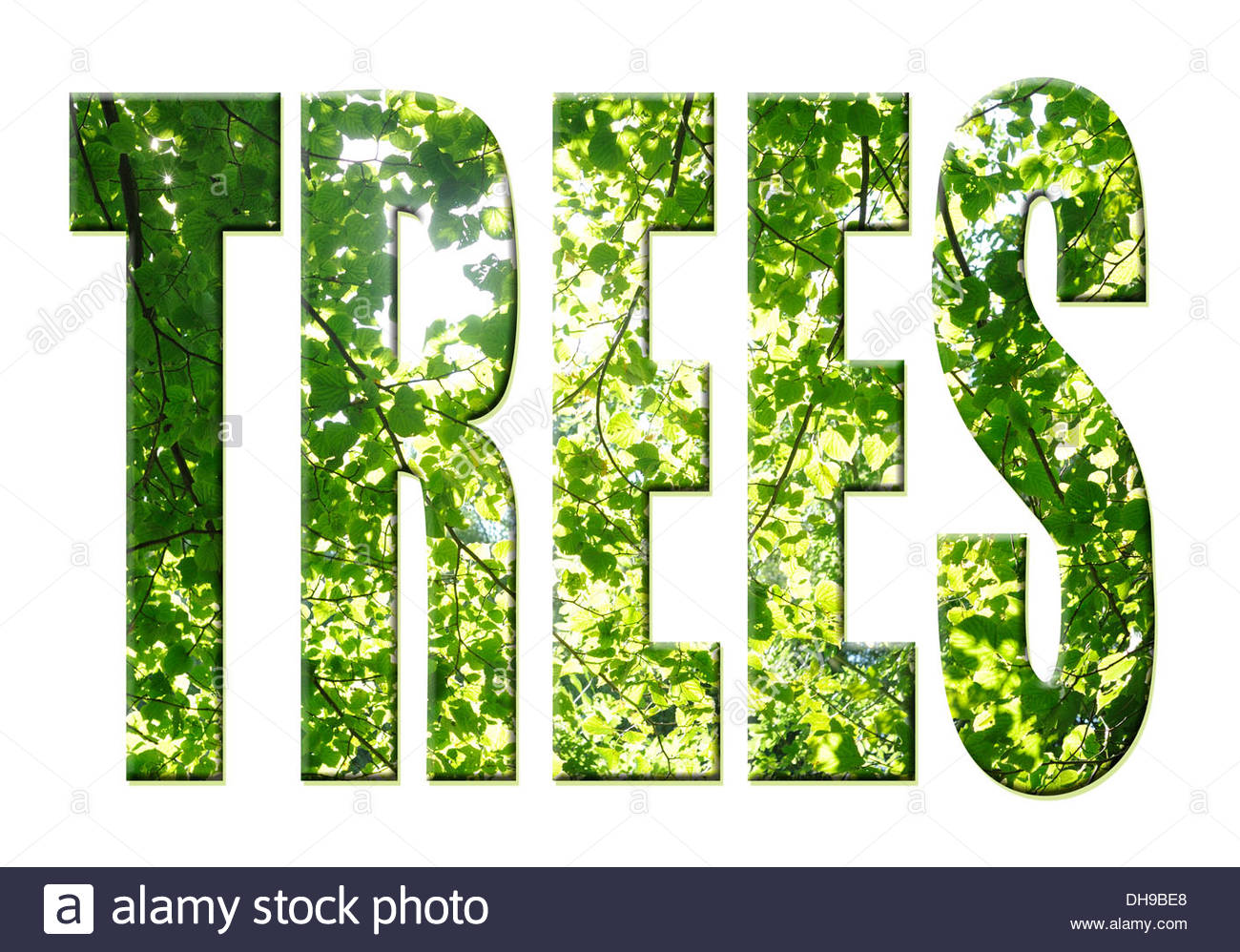 Digital composition Tree word - trees - Stock Image