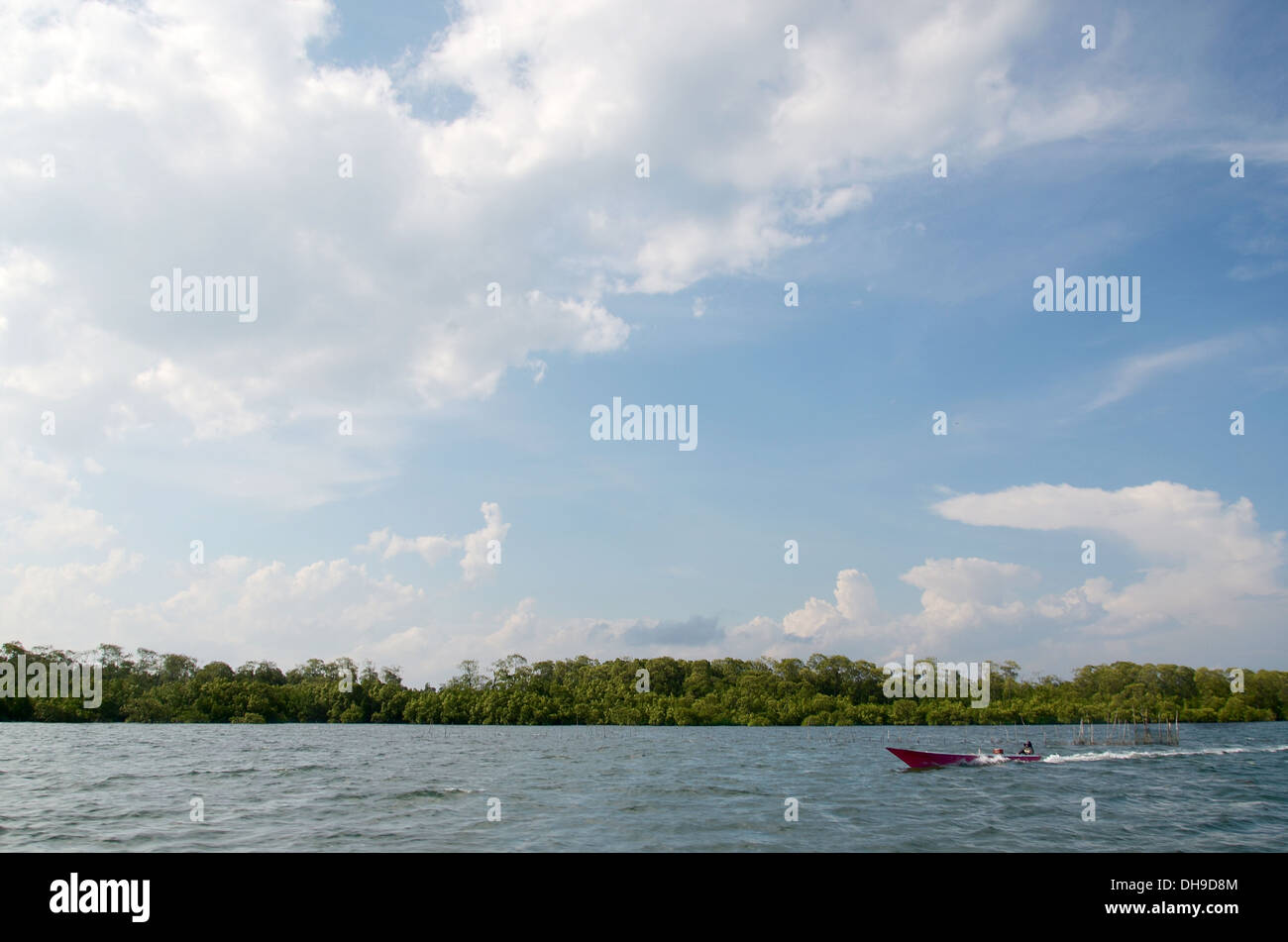 Blue sky in the sea front with mangrove forest with a boat - Stock Image