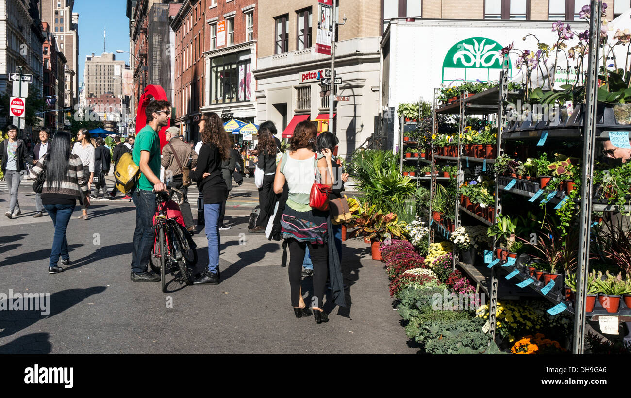 plants for urban gardeners located at north entry to Union square greenmarket where people socialize on glorious autumn day - Stock Image