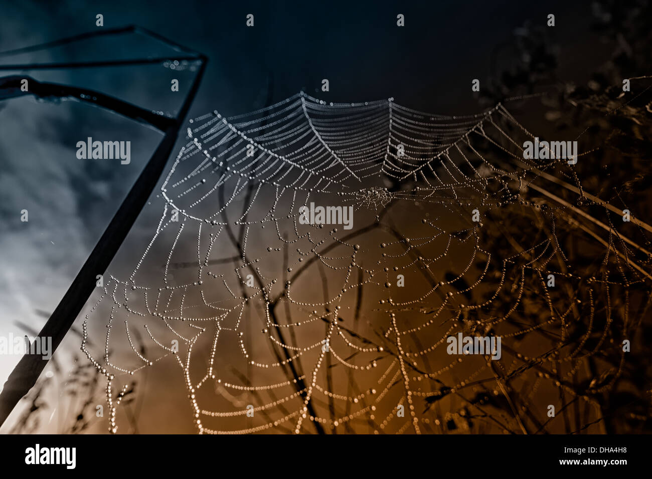 Spider web with dew dampened the early morning. In the background a blue and orange colored sky with clouds. Stock Photo